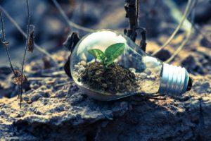 clear-light-bulb-planter-on-gray-rock